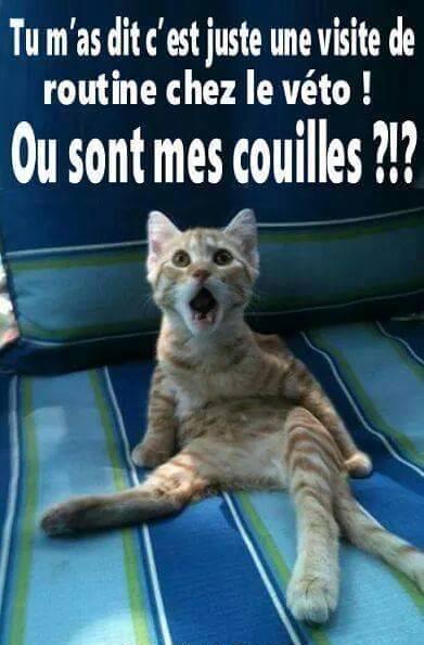 Mort de rire — parce que j'ai le sens de l'humour ! - Page 3 201541165438_coulis